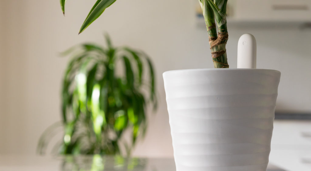 (26.05.2019) Gearbest – Xiaomi Mi Flower Care Sensor für 13,50€