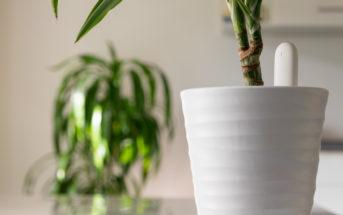 Xiaomi Mi Home Flower Care Feuchtigkeitssensor für Pflanzen im Test